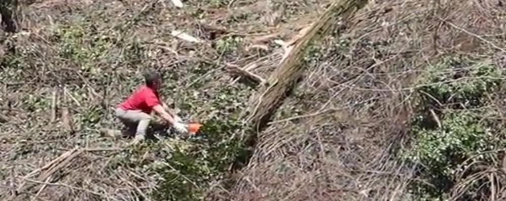 Ferito mentre taglia una pianta Soccorso un 54enne a Casnigo