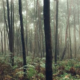 Nel bosco degli uomini irrisolti con Sandro Campani
