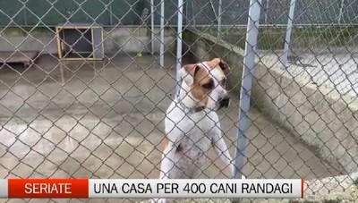 Seriate: una casa per 400 cani randagi da tutta la provincia