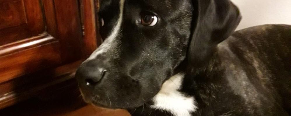 Aperti i servizi per animali Polemiche e precisazioni