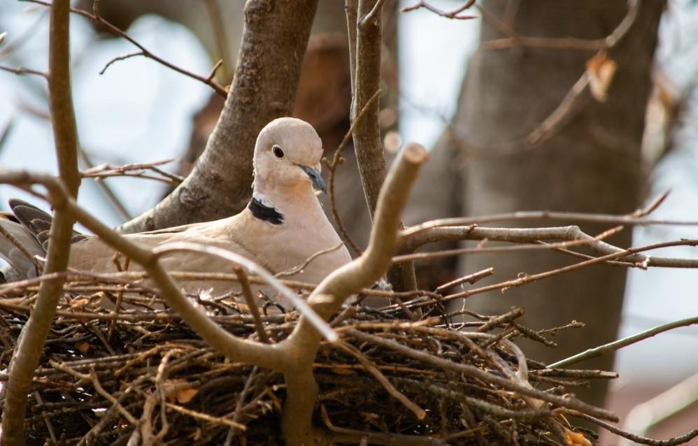Il nido - Galleria fotografica L'Eco di Bergamo - Notizie ...