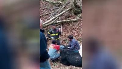 Mucca salvata a  Endine