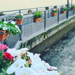 «Sei di Alzano se... porti un fiore». La ciclabile si riempie di bellezza - Foto