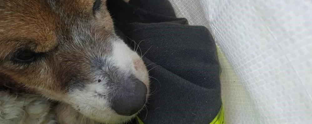 Solza, il cagnolino Charly portato in salvo dai pompieri. Mancava da casa da 4 giorni - Foto