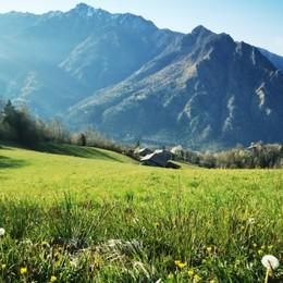 Montagne e prati in fiore