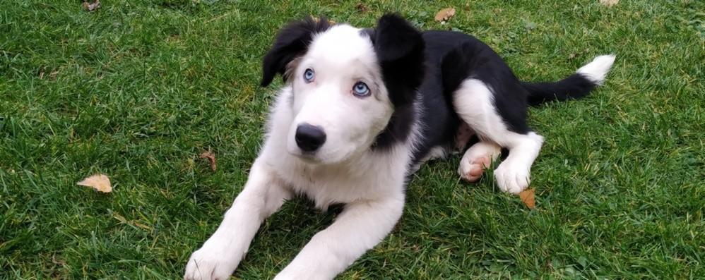 Cuccioli, nel lockdown boom  di acquisti e di adozioni