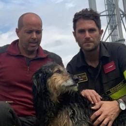 Cane cade nelle acque della centrale idroelettrica a Marne: in salvo ora cerca una famiglia