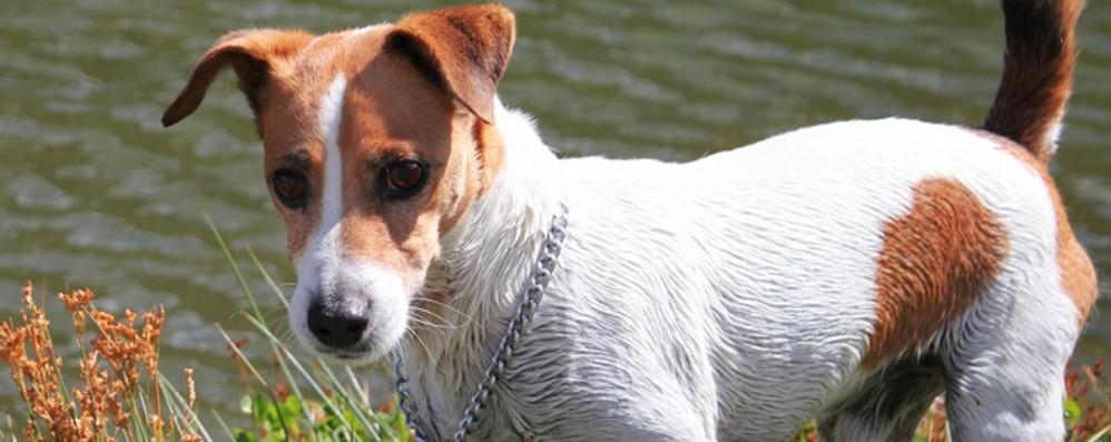 Il cane insegue biciclette e motorini? Ecco perché e come fare