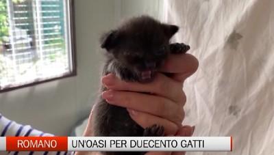 Romano di Lombardia: un'oasi per 200 gatti