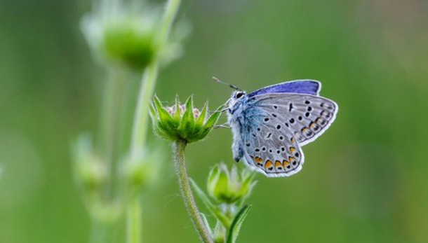 «Stupenda farfalla...»