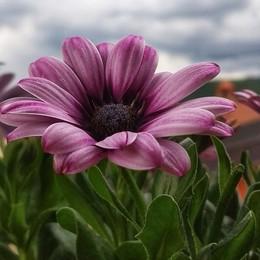 Un fiore porta il sereno