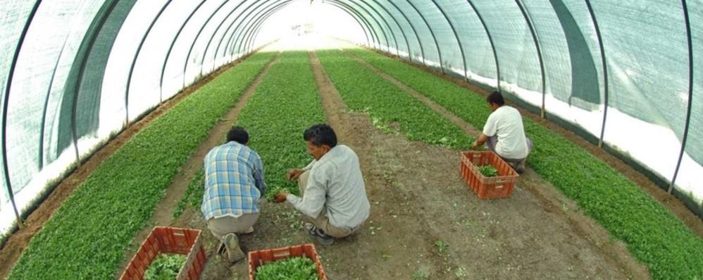 Variante indiana, dopo lo stop d'ingresso preoccupazione nell'agricoltura orobica