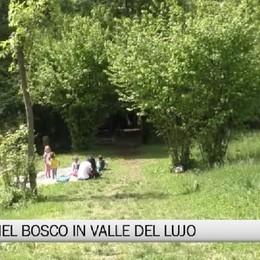 Abbazia, l'asilo nel bosco in Valle del Lujo