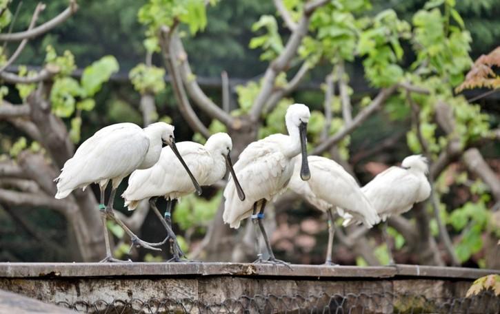 Il Parco Le Cornelle riparte con nuove specie,  in sicurezza alla scoperta della biodiversità - Video