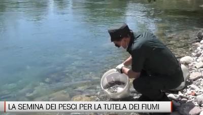 La semina dei pesci nei fiumi bergamaschi