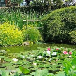 Lombardia, gli Orti botanici pronti ad accogliere i visitatori in sicurezza: Bergamo c'è, ecco gli orari
