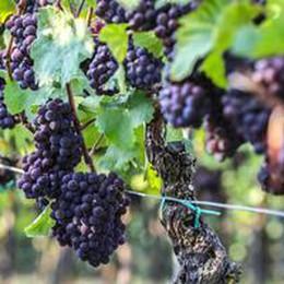 Produttori vino a Ue, servono fondi extra