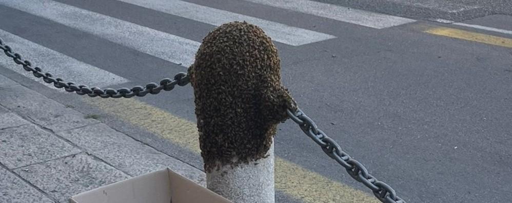 20 mila api in centro a Bergamo: allarme in via Camozzi