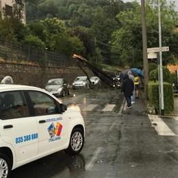 Grandinata in Bergamasca: alberi abbattuti e massi sulle strade - Foto e video