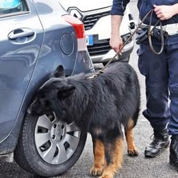 Polizia locale, il cane Tenai scova 4,5 kg di droga in un box di via Martin Luther King