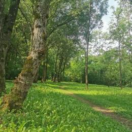 In mezzo agli alberi