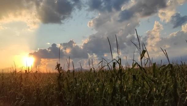 In un campo di grano