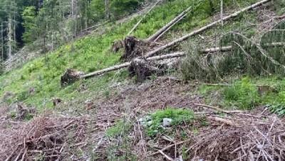 Sempre meno boscaioli e sempre più bostrico in Alta Val Seriana