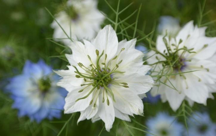 Orto botanico in Città Alta e ad Astino: da scoprire anche in agosto