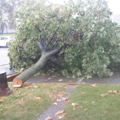 Vandali in azione a Curno: segati tre alberi vicino al centro commerciale - Foto