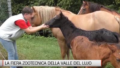 Abbazia, la fiera zootecnica della Valle del Lujo