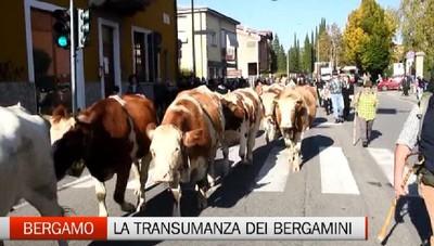 Bergamo: torna la Transumanza dei bergamini
