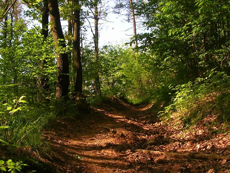 InfariNatura, i sentieri del Parco Pineta si presentano