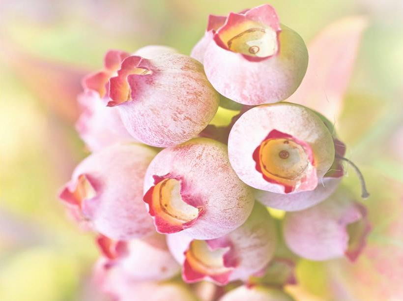 «Piccoli frutti» nelle foto di Pio Rota