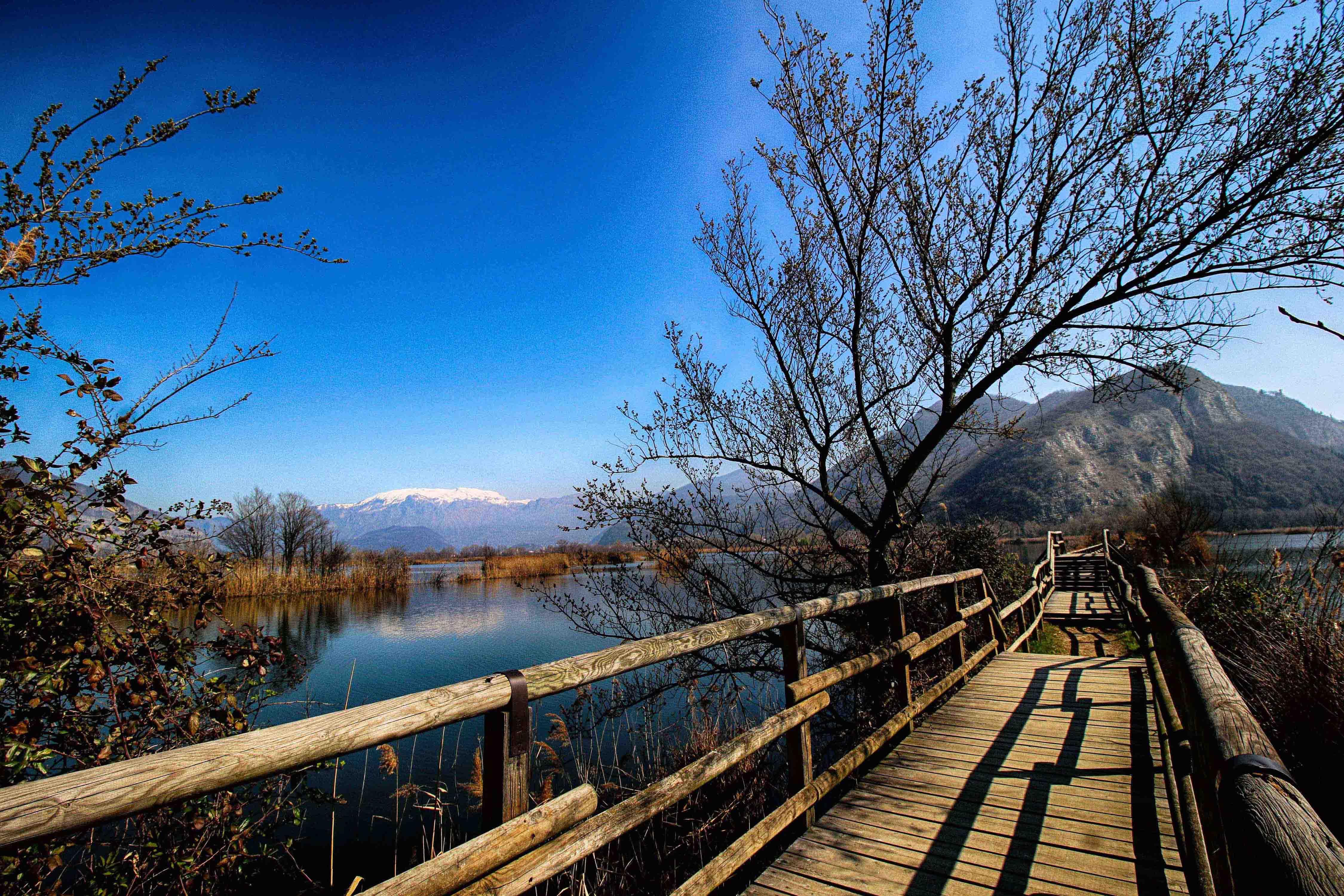 Camminata naturalistica alle Torbiere del Sebino