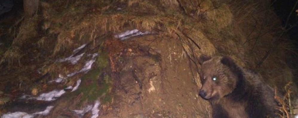 Orso in Valtellina, assemblea pubblica a Bianzone