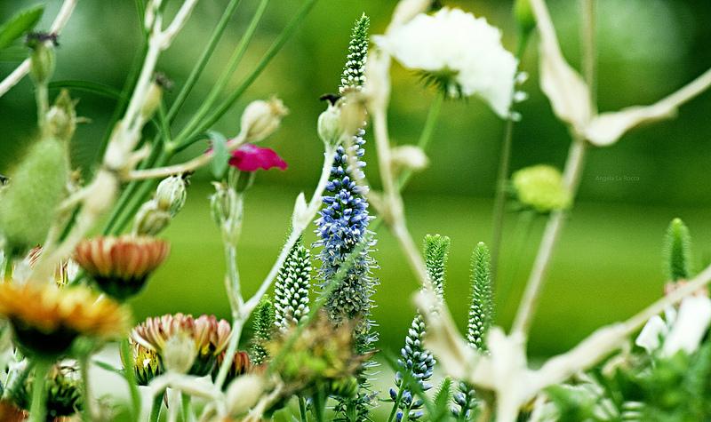 Weekend tra i fiori a Oltre il Colle