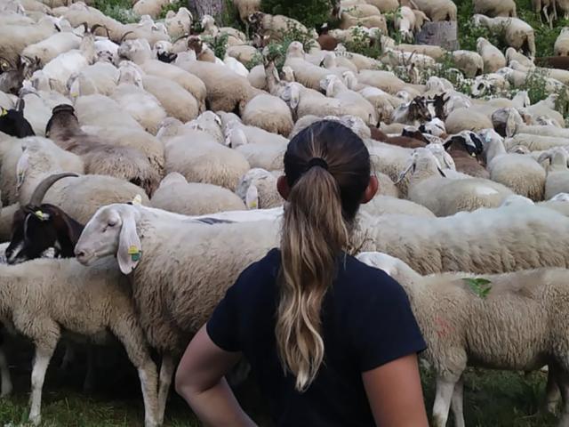 Andare con il gregge, un progetto condiviso in Valle Camonica