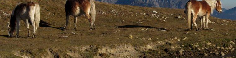 16778_laghetto-del-monte-ponciv