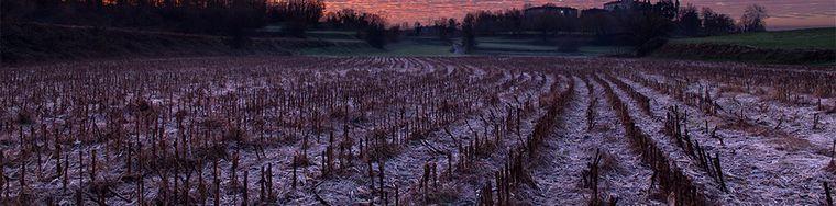 15041_campi-di-grano