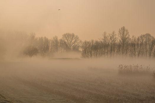 I vostri messaggi, una luce nella nebbia