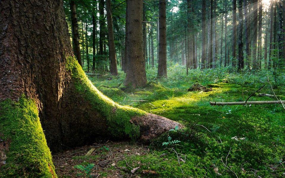 Festival delle Foreste: incontri, conferenze e una camminata