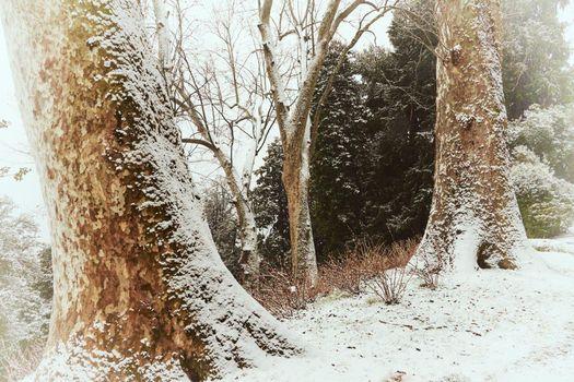Bellezze d'inverno, incontri a Villa Carlotta