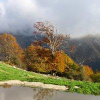 autunno , la mia stagione preferita, cadono le foglie ma i colori si accendono..bella gallery delle nostre montagne!! ciao