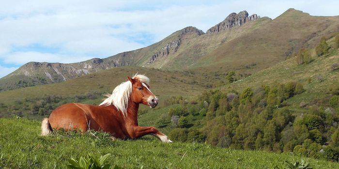 Cavalli del Bisbino. Il video della transumanza