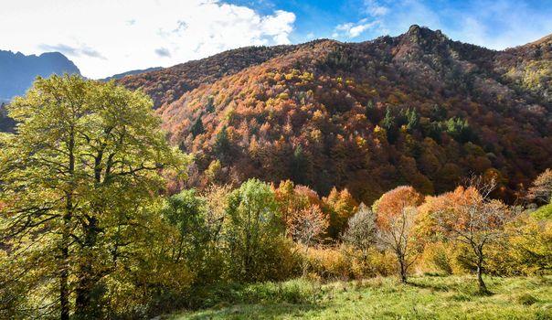 Nel weekend un tuffo nei colori e nei sapori dell'autunno
