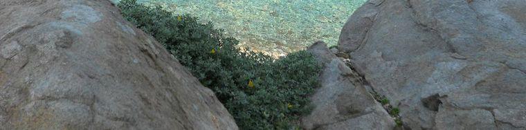 14229_sardegna-fiori-di-primavera