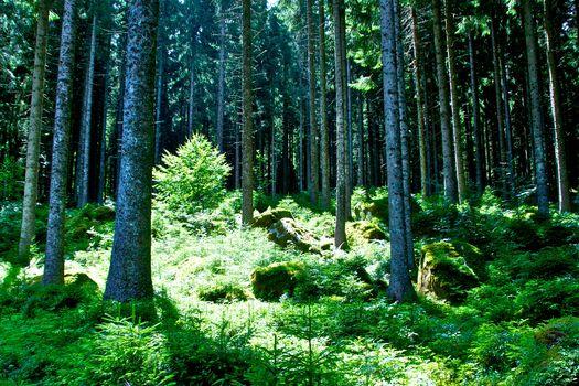 Festival delle foreste, i polmoni verdi della Terra