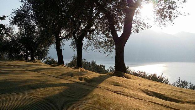 A Marone una camminata tra gli ulivi