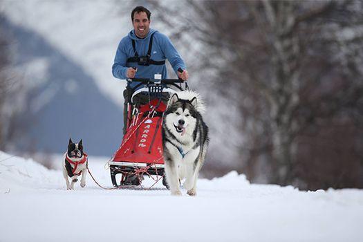 All'Alpe Giumello tornano gli Alaskan Malamute